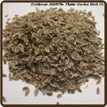 DILL, GOLDKRONE (Organic) - Anethum graveolens