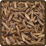 CARAWAY (All Natural) - Carum carvi
