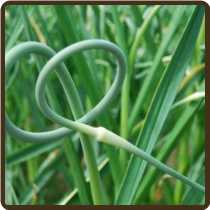 GARLIC SCAPES (All Natural)(Not Available)