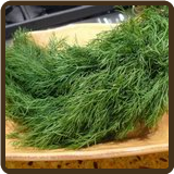 DILL, INDIAN (All Natural) - Anethum sowa