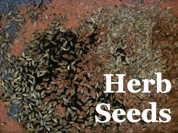 Thyme Garden Herb Company All Natural Herbs Herb Seeds
